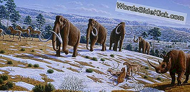 Feiten Over Woolly Mammoths