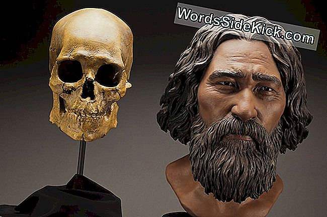 8.500-Jarige 'Kennewick Man' Is Inheems-Amerikaans