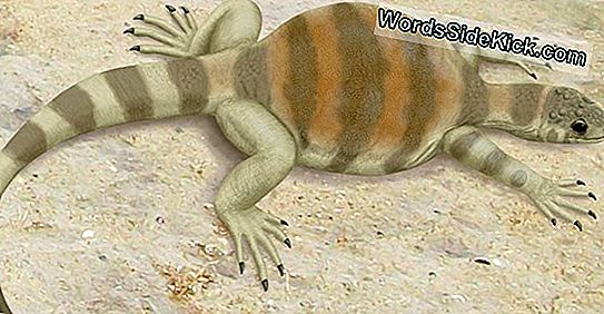 Oude, Shell-Less Turtle Sported Whiplike Tail