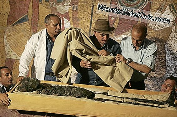 King Tut'S Tomb May Hide Nefertiti'S Secret Grave