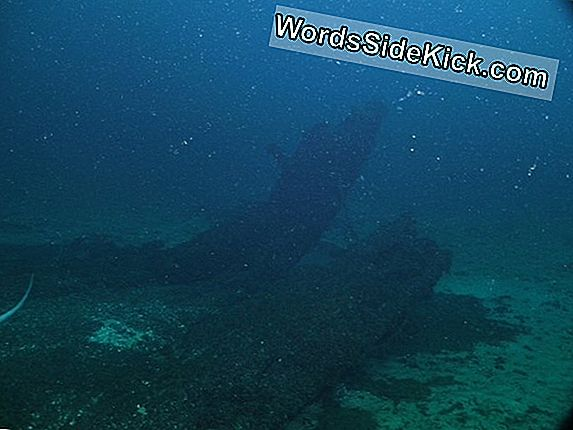 Treasure Hunters Vind Mysterious Shipwreck In Lake Michigan