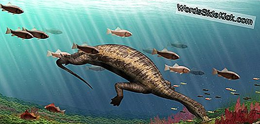 Fearsome Dinosaur-Age 'Hammerhead' Reptile Ate... Plants?