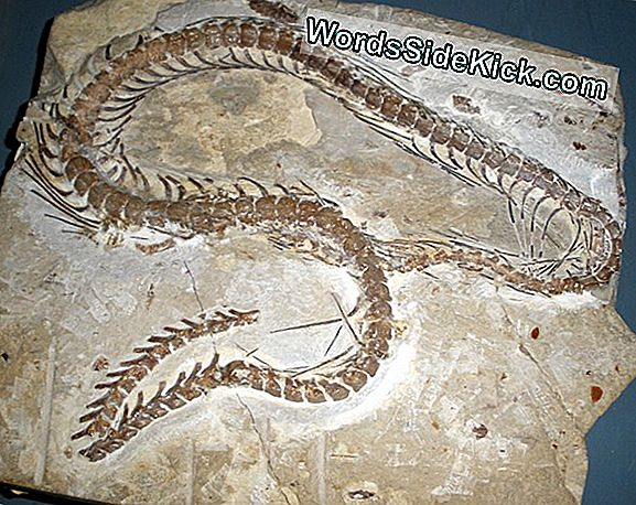 Röntgenstralen Reveal Ancient Snake'S Hidden Leg