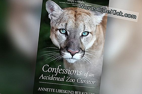 WordsSideKick.com Book Giveaway: 'Confessions Of An Accidental Zoo Curator'
