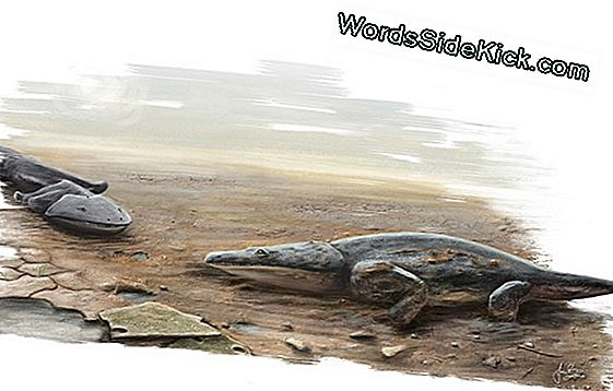 In Foto'S: Giant Amphibian Ruled Ancient Rivers