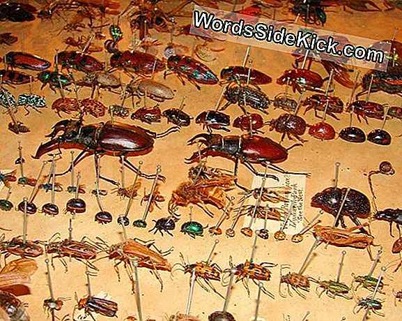 Cabinet Of Wonders: Personal Collection Of Alfred Russel Wallace