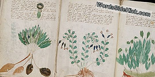 10 Words In Mysterious Voynich Manuscript Decoded
