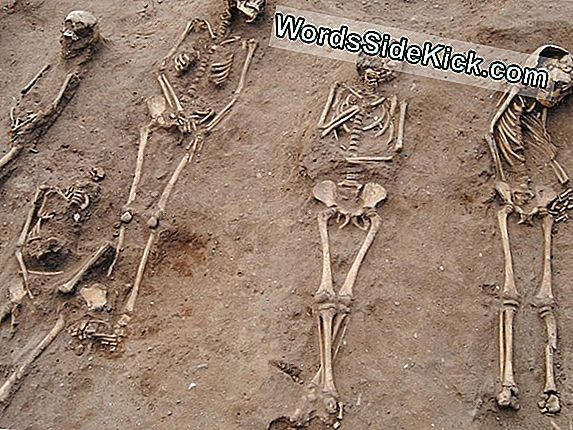 Black Death 'Plague Pit' Met 48 Skeletten Is 'Extremely Rare' Find