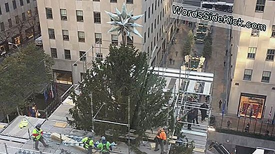 Christmas Rock! Hoe Rockefeller Tree Dwarfs Household Displays (Infographic)