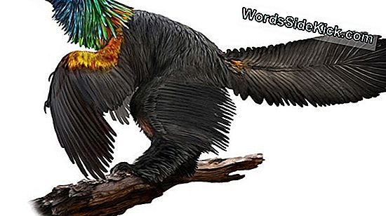 Ancient Bird'S Feathers Had Iridescent Glow