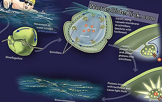 Bacterial Banquet: What Ocean Algae Eat