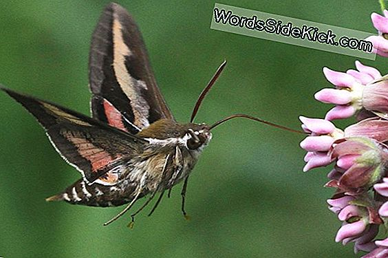 Mystery Of Moth Flight Uncovered