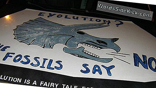 Creationist Debat Stalls South Carolina State Fossil Bill