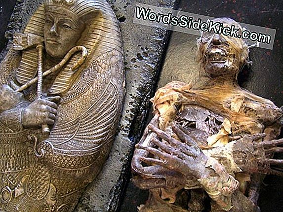 Egyptian Carving Defaced Van King Tut'S Possible Father Discovered