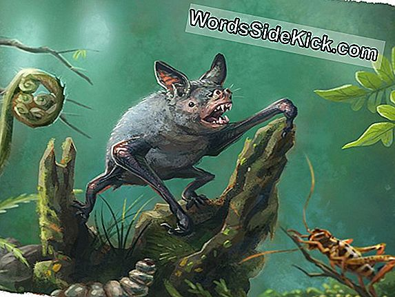Giant 'Walking Bat' Once Prowled Rainforest Floors
