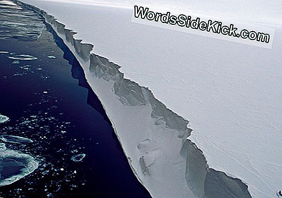 Life On The Edge: Foto'S Van De Ross Ice Shelf
