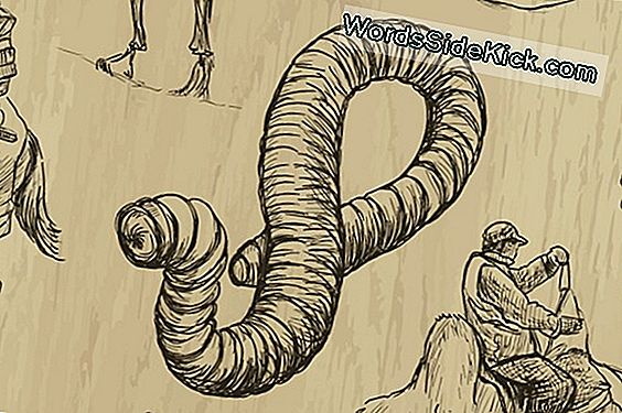 Mongolian Death Worm: Elusive Legend Of The Gobi Desert