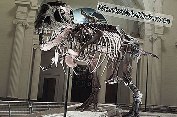 Old Thunder Thighs: T. Rex'S Weight Topped 9 Ton