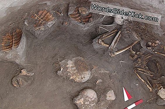 Funeral Feast? Butchered Turtles In Ancient Grave Hint At Ritual
