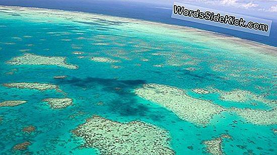 Chilling News: Great Barrier Reef Warmt Op