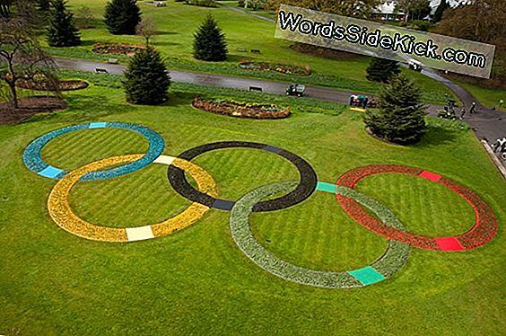 Foto: London Kew Gardens Plant Olympic Rings