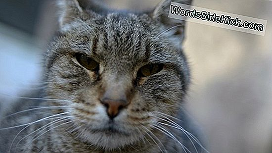 En Garde! Bende Van Feral Cats Attack Woman, Dog In France