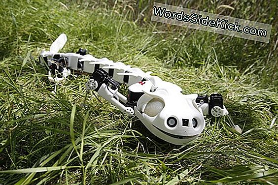 Bekijk Een Robot Salamander Swim And Walk (Video)