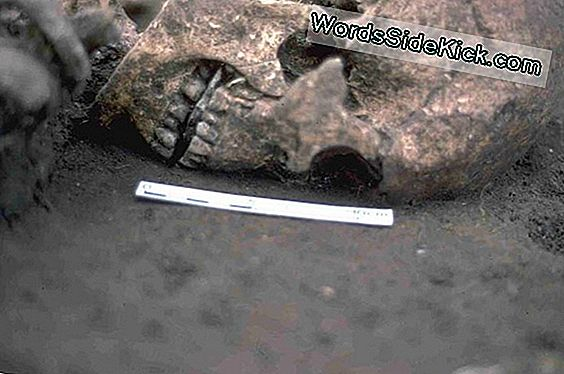 Grisly Find: Roman-Era Man May Have Haded Out Out