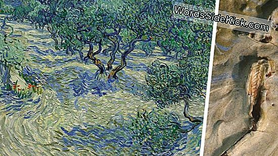 Tiny Grasshopper Found Verborgen In Van Gogh Painting, 128 Jaar Later