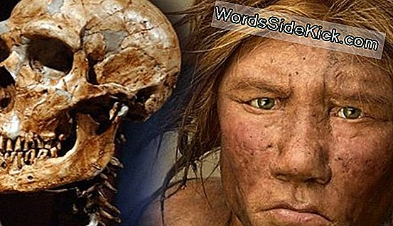 Neanderthalers En Denisovans Mated, New Hybrid Bone Reveals
