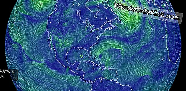 Beautiful Earth Visualization Toont Het Weer In Beweging