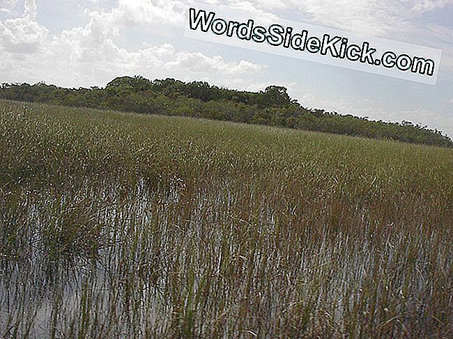 Vaste boomeiland in Shark River Slough, Everglades.