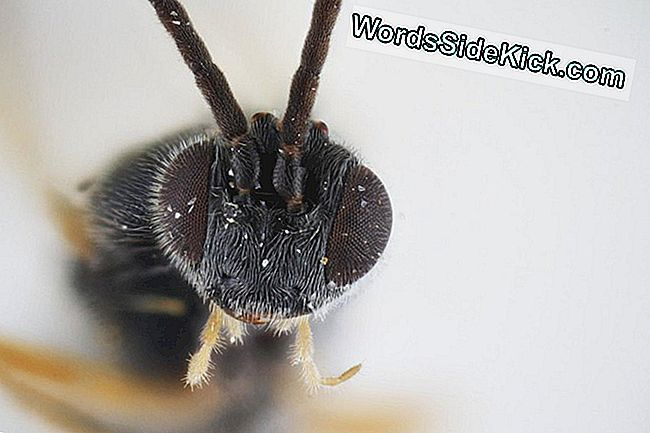 Game Over, Mees: See Australian Wasp Paneb Rindkere Purustavaid