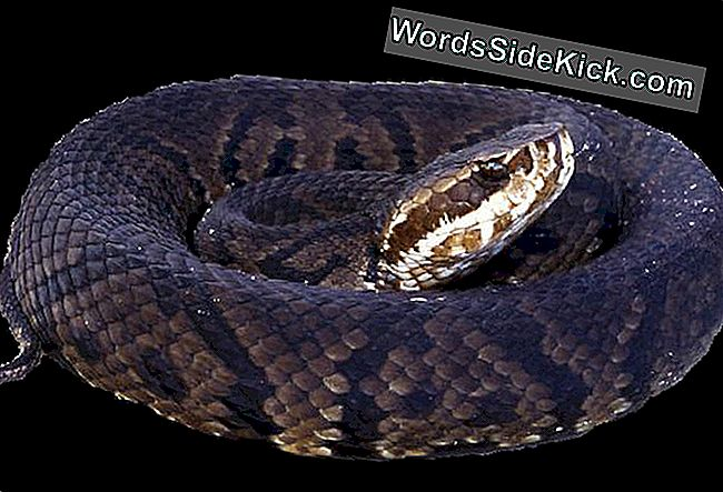Venomous Snakes Harbour Deadly Brain-Turvotus Virus