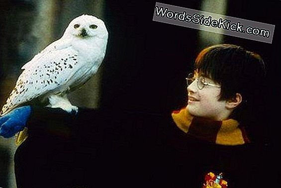 Harry Potters Snowy Owl: Ikke Kun For Guider