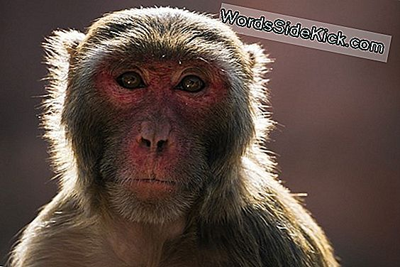 Monkey Brain, Seeing Human Parallels