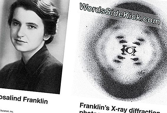 Rosalind Franklin: Biografi & Discovery Of Dna Structure