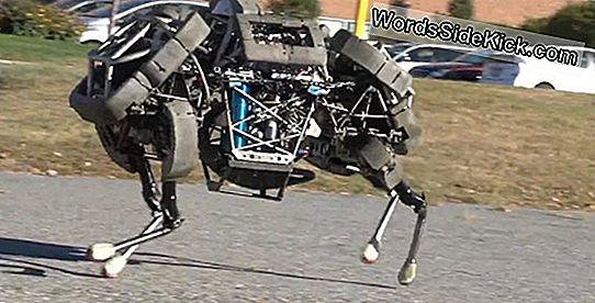 Wildcat Robot Gallops In Video-Debuut