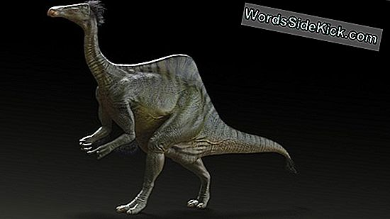 Wacky Humpbacked Dinosaur Looked Like 'Star Wars' Creature