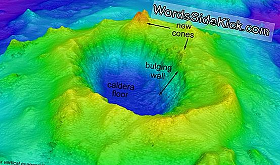 Fundet! New Underwater Volcano Opdaget I Hawaii