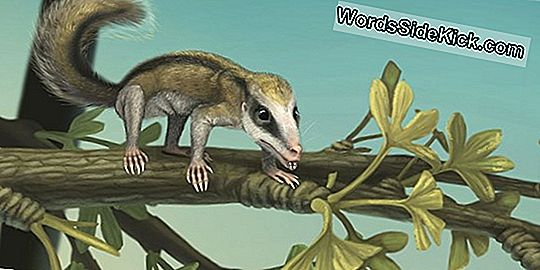 2 Jurassic Mini Mammal Species In China Entdeckt