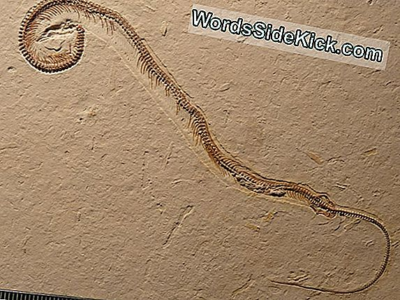 Unexpected Step: Snake Ancestor Had Four Feet