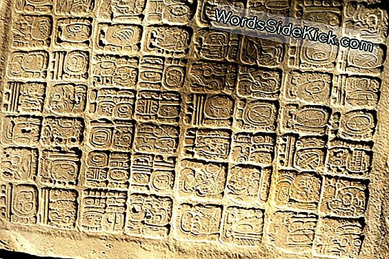 Ancient Mayan Tablet With Hieroglyphics Honors Lowly King
