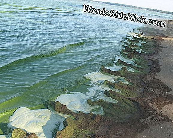 Lake Erie Dead Zone: Kland Ikke Slime!