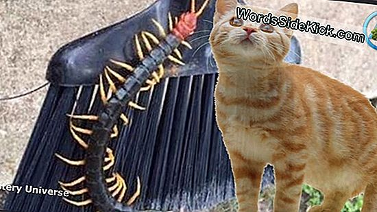 Giant Redheaded Centipede Photo Goes Viral, Horrifies Internetissä