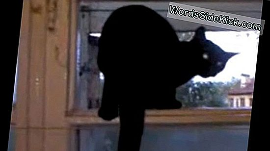 Cat Barks Like Dog: Video Explained