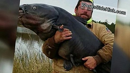 Reel Big: 112-Pound Catfish Fanget I North Carolina