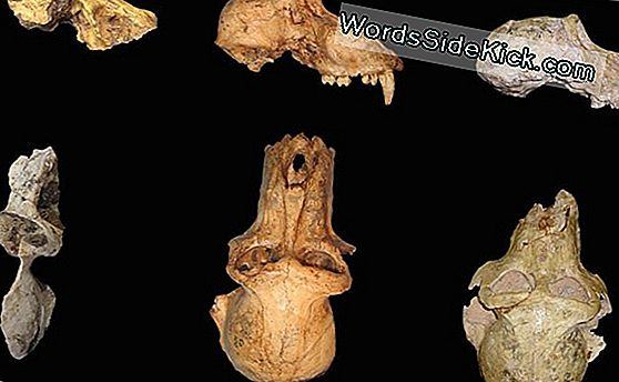 Skull Of Earliest Baboon Discovered