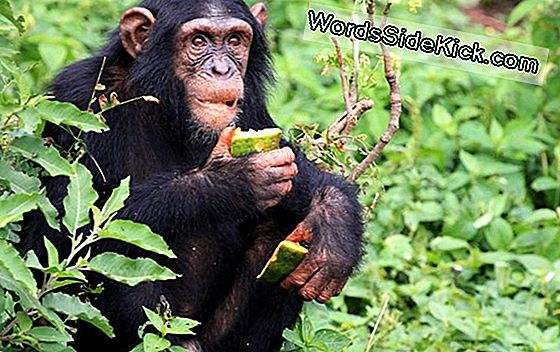 Monkeys Plant Food Gør Dem Mean & Horny