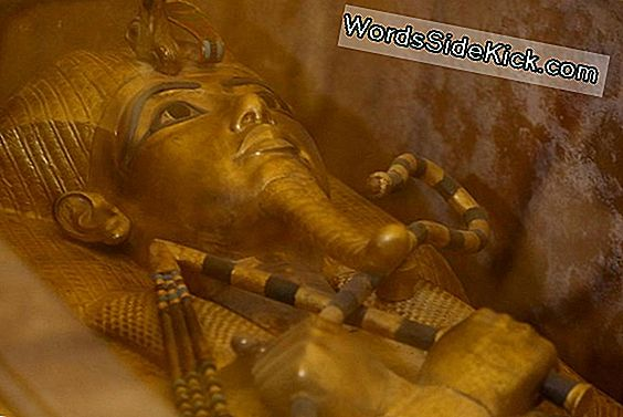 The Curse Of King Tut: Fakta & Fabel